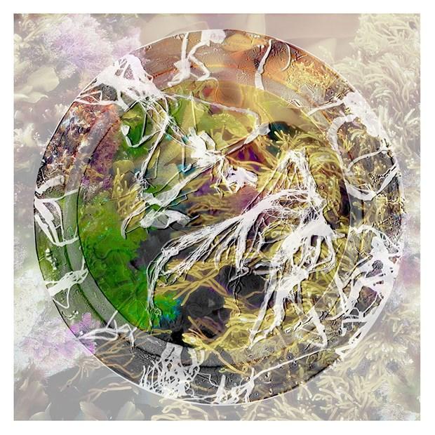 Rockpools and Seaweed Vignettes - Credit: Martin Urmson and Henny Burnett