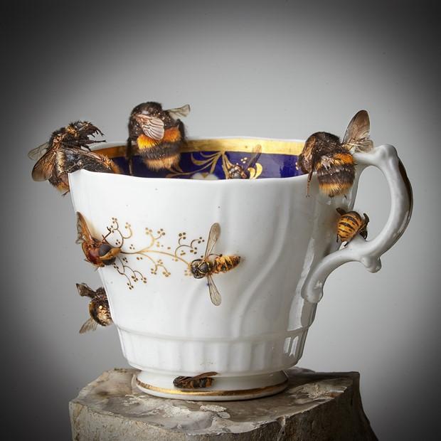 Teacup Memories:  Tea with J.E.M.Mellor Entomologist
