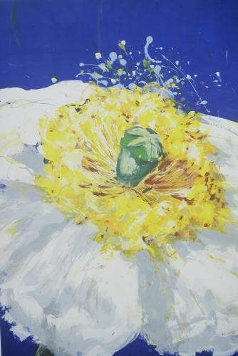 Full bloom, white poppy on ultramarine
