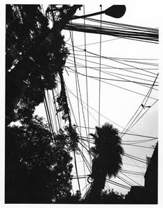 La Condesa, Mexico City, by Michele Lazenby