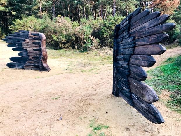 Gilbert White - Night-Jar Wings in situ