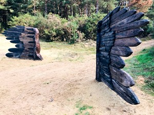 Gilbert White - Night-Jar Wings in situ, by David Lloyd
