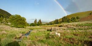 new website Dernol Valley, by Sue Purcell