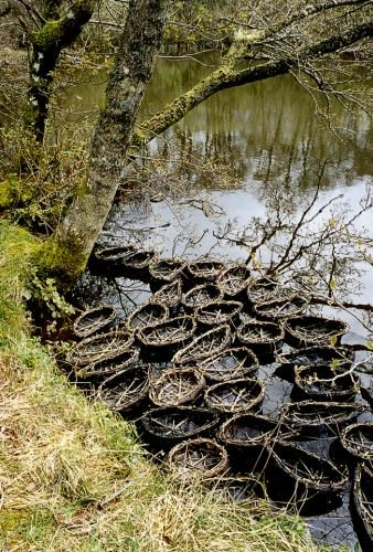 Coracles