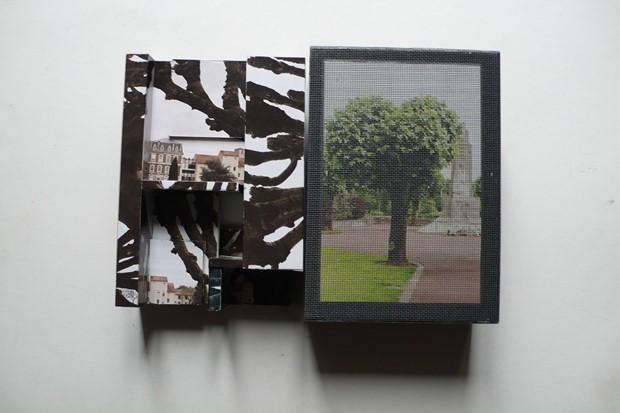 Tree Confolens France