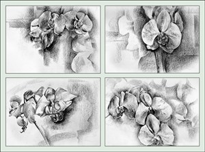 Wendy's Orchids, by Patrick Caseley