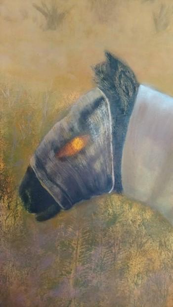 Sun-Barded Horse - Credit: Jenny Mellings