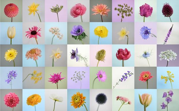 FarmerFlorist exhibition, by Tessa Bunney