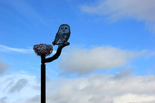 Horbury Owl - Credit: Bruce Williams