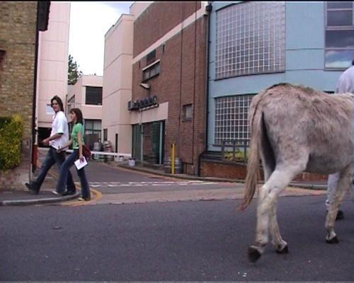 Donkey Business - Credit: Lucy Pedlar