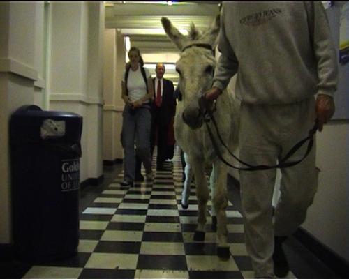 Donkey Business - Credit: Lewis Amar
