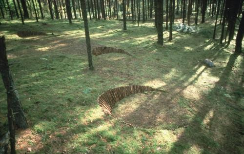 Pine Steps
