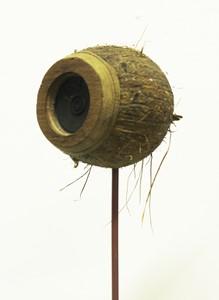 coconut loudspeaker, by Paul Gittins