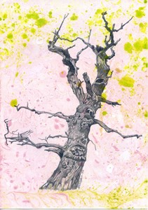Tree at Westonbirt, by Emma Williams