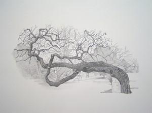Tree at Kew, by Emma Williams
