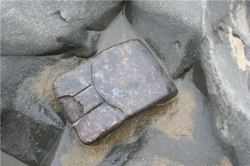 Fossil:  Genius Computer Mouse, UK South Coast, 21st Century Technology and Communication