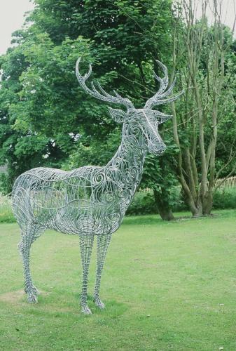 Belfield stag