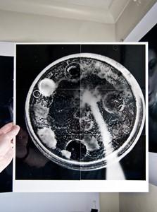 Unique Photogram Composite ~3, by Jeremy Webb