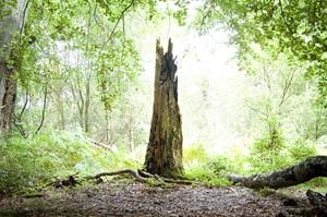 Woodland Stump, Ashridge, by Jeremy Webb
