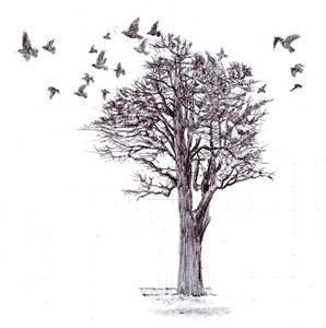 Birds, by Charlotte Harker