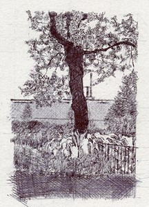 Hardy Tree I, by Charlotte Harker