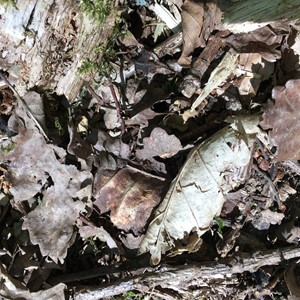 Wychwood Forest Trust - Come Into The Woods: Singe Wood, by Flora Gregory