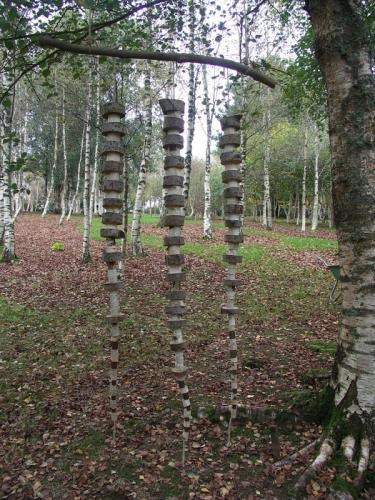 Homage to Betula