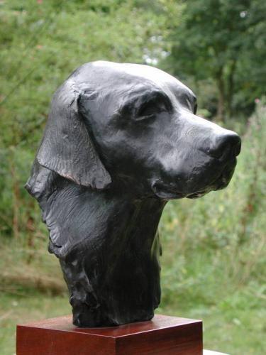 Bust of a Labrador
