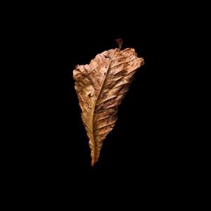Leaf, by James Gregory