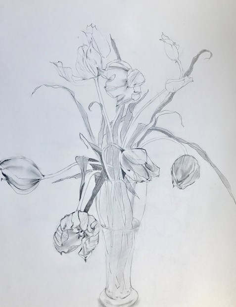 Tulips Alive
