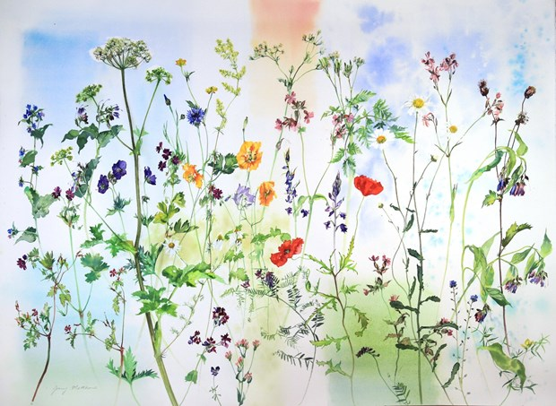 Favourite Wild Flowers