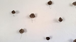 Untitled (leaves), by Susan Williams