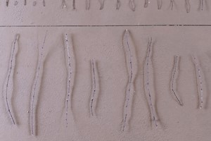Untitled (thorns), by Susan Williams