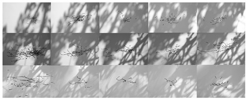 85 Minutes - Wind Drawings with Shadow