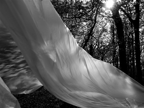 Nature Unwrapped (Light Catcher)