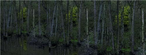 Closer 1: Treeline