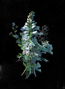 Votive Offering No.86 - White Foxglove after Mary Delany, by Kirsty Lorenz