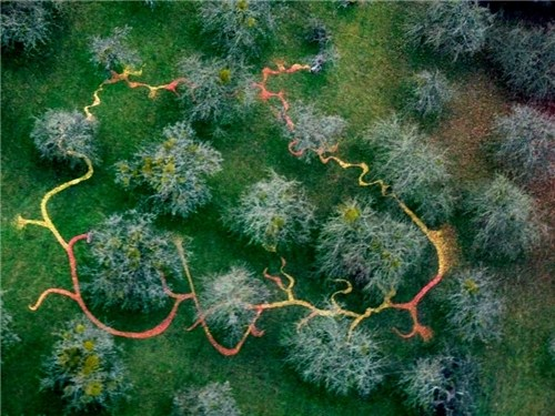 Earthwork Drawing, Orchard