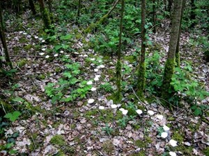 Breadcrumb trail, by Jane Ponsford