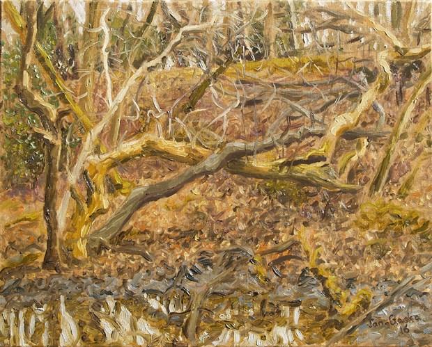 Woodland Bog