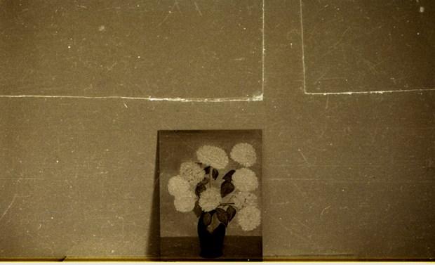 flowers / dublin