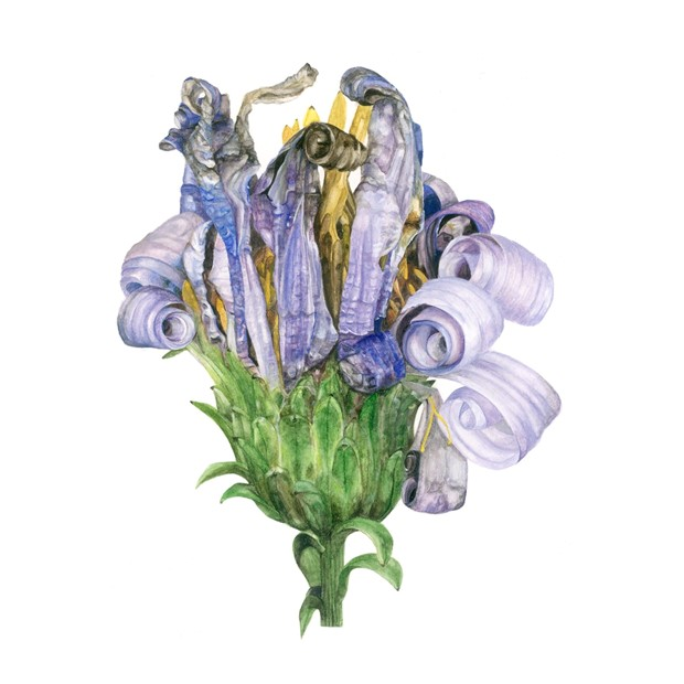 RHS London Botanical Art Show, by Claire McDermott