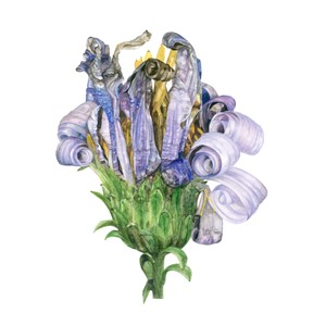 RHS London Botanical Art Show, by Claire McDermott