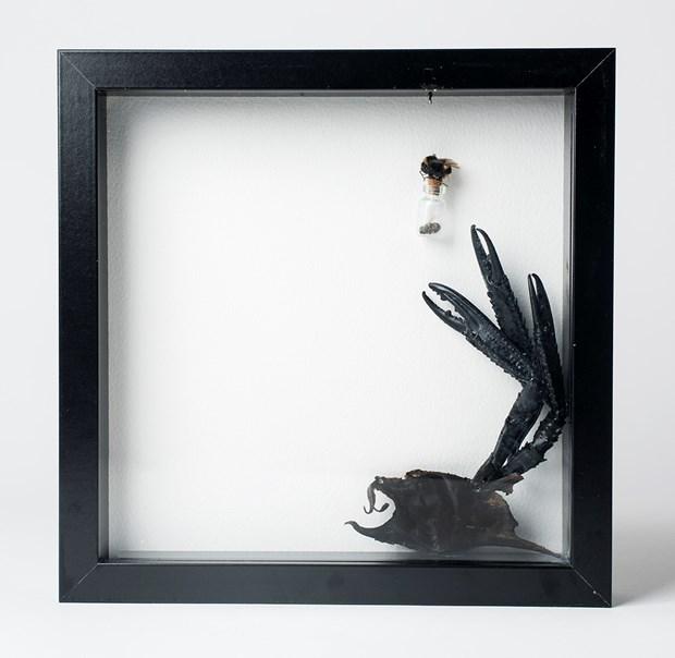 Box Series: Bees