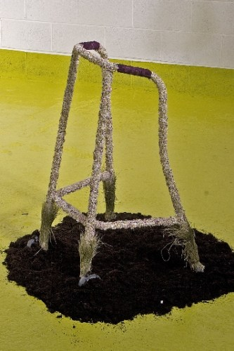 'Pushing up the daisies' Zimmer Frame