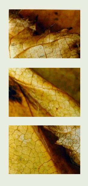 Fallen leaf: November 1, 2018