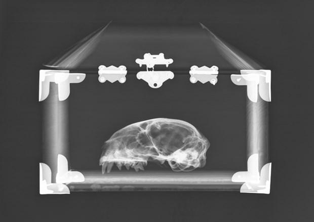 Schrödinger's Cat Reliquary #11