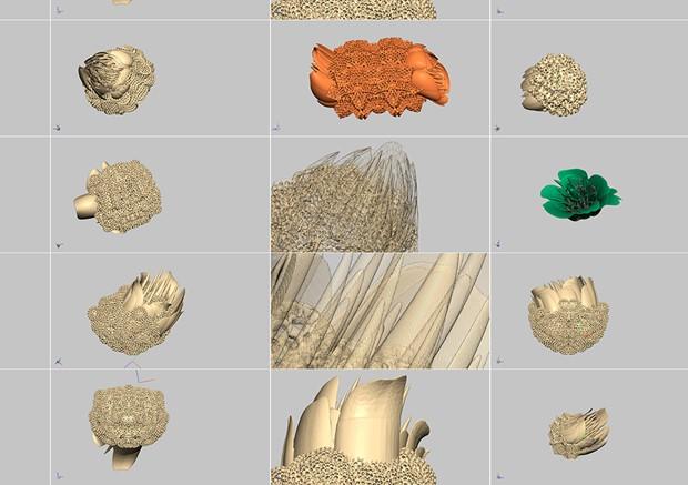 Future Seedpod Fossil