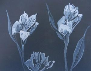 Sue Hunt: New Work, by Sue Hunt