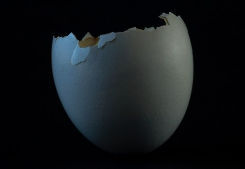EGG from the series SPENT